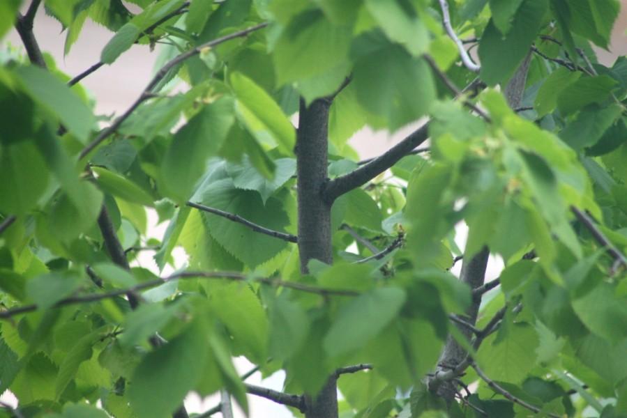 Foliage Report_May 30 2013-1556-B