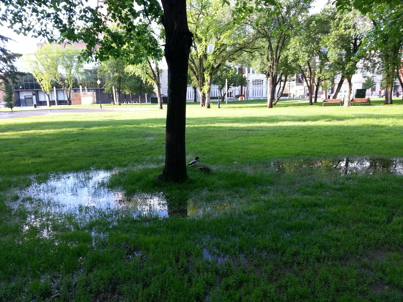 Victoria Park (Ducks)