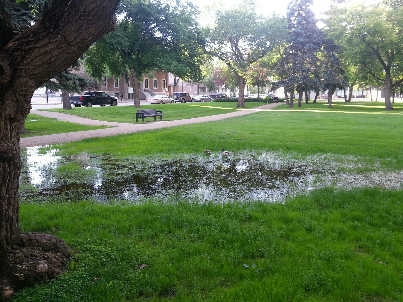 Victoria Park (DucksV)