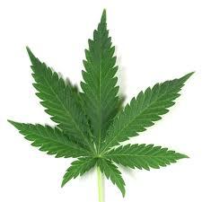 CannabisII
